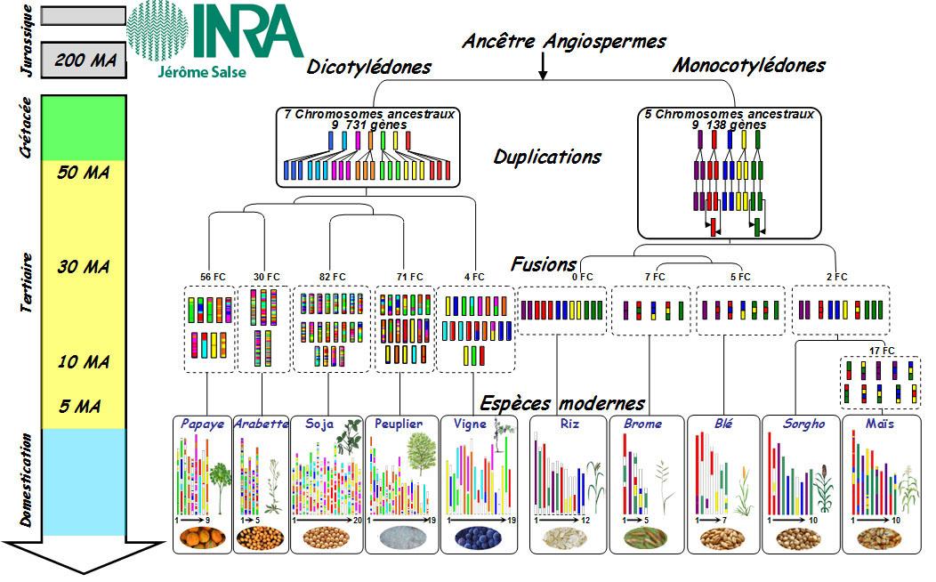 FormaVie 2013 : Les plantes modernes : origine, nouvelles espèces et amélioration variétale