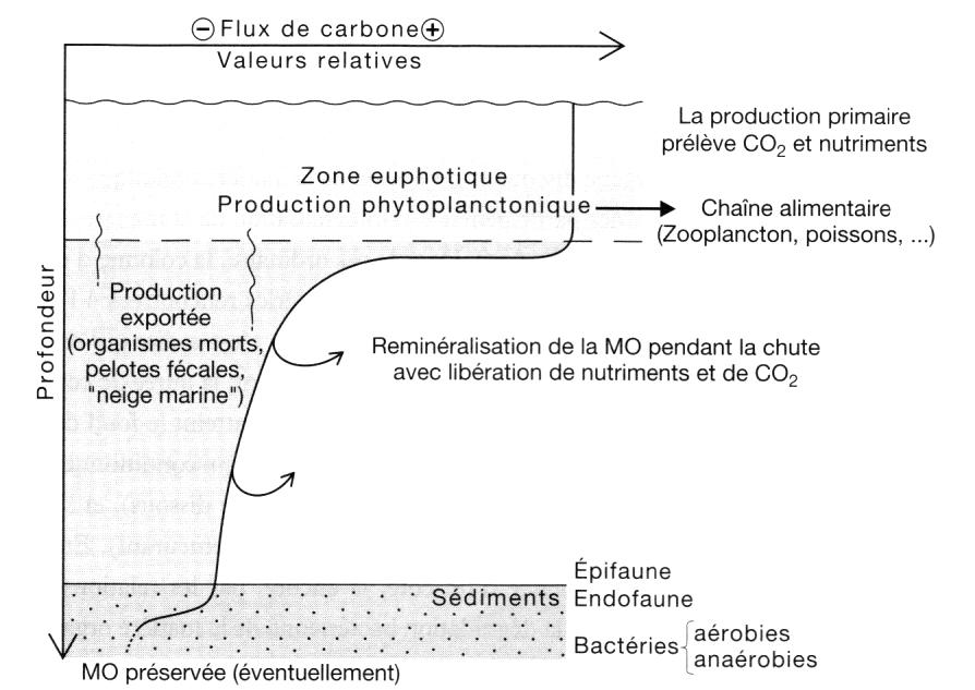 devenir_du_carbone
