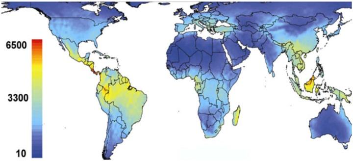 Richesse de la biodiversité mondiale en végétal vasculaire