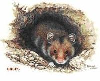 Classe de 2de: L'Homme protège la biodiversité des sols: exemple du grand Hamster d'Alsace