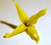 Fleurs D Angiospermes Site Des Ressources D Acces Pour Enseigner