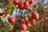Rechercher de nouvelles variétés résistantes