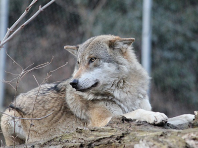La conservation des espèces en France