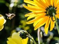 La déclaration de Paris sur la Biodiversité