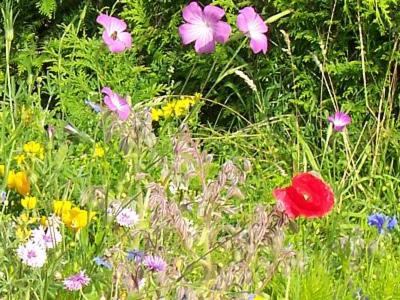 Recherches sur la biodiversité