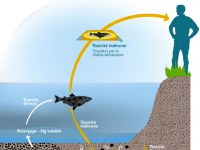 Bio-surveillance et évaluation du risque toxique en milieu aquatique