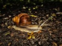 Les escargots, bio-indicateurs de la qualité des sols.