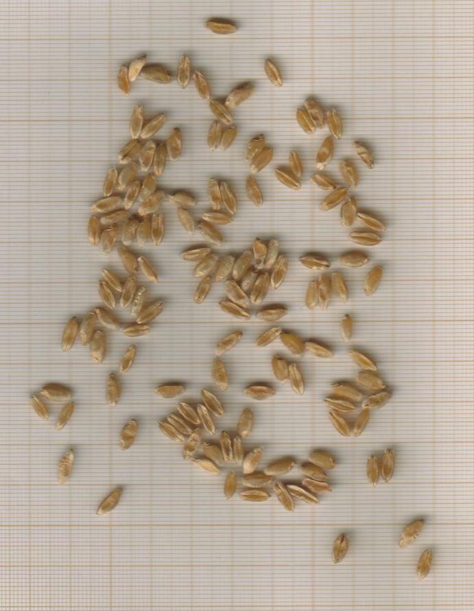grains-carlit-casnin.jpg