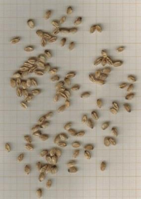 grains-gros-turquet-casnin.jpg