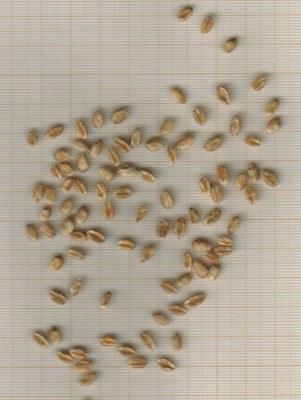 grains-lafayette-casnin.jpg