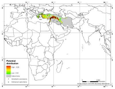 carte de distribution A. speltoides (proche du donneur du génome B, sauvage)