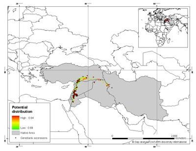 carte de distribution T. turgidum dicoccoides (sauvage)