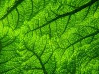 Classification des végétaux