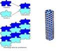 Dimère de tubuline et microtubule