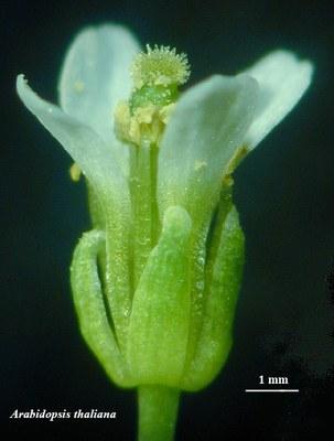 fleur sauvage de côté