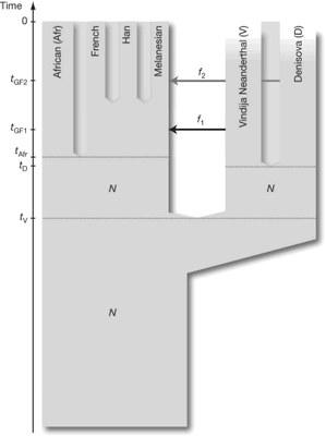 Phylo-Homo1.jpg