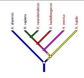 arbre genre_homo.jpg