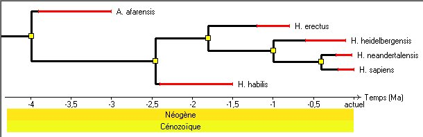 datation hominines.jpg