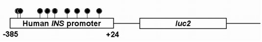 Construction transgenèse méthylée.jpg