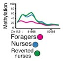 Foragers - Nurses - Reverted.jpg