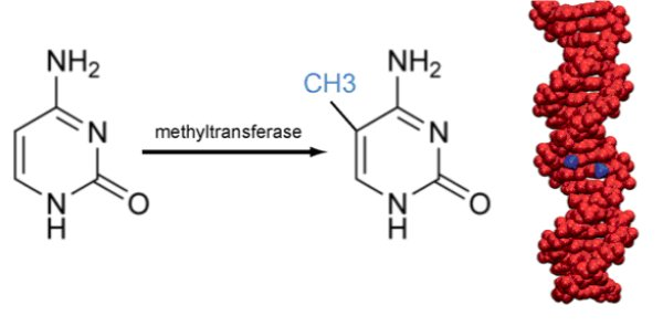 methylation.jpg