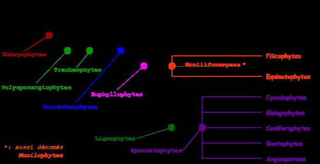 arbre embryophytes 1.png