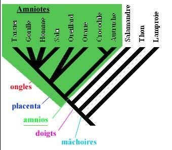 amniotesb.jpg
