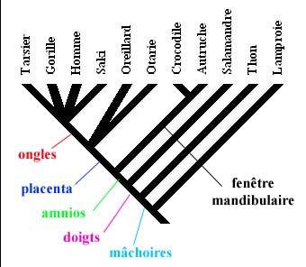 arbre1.jpeg