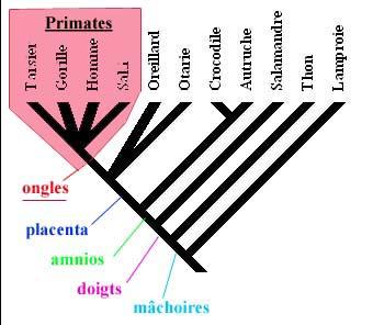 primatesb.jpg