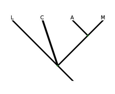 arbre3