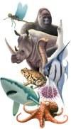 Animal-diversity-web.jpg
