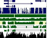 GenomeWiki.jpg