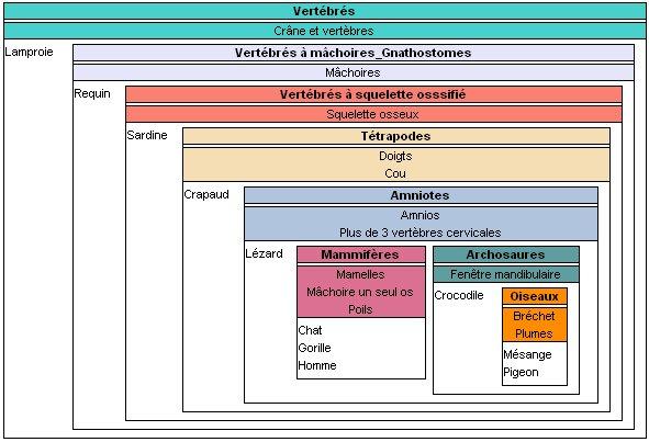 phylogene svt