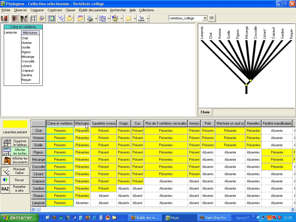 le logiciel phylogene