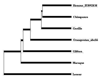 arbre_UPGMA.jpg
