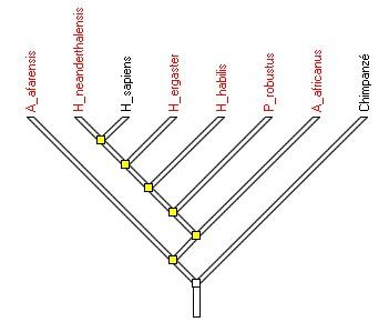 Hominoines-arbre-ref