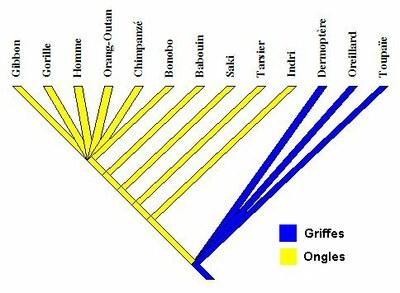 phylogene.jpg