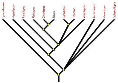 arbre_equides.jpg