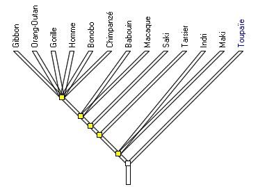primates ref arbre