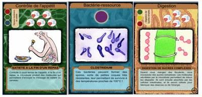 Atelier Le microbiote et son hote.JPG