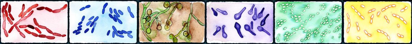Présentation Formation Microbiote 2019.png