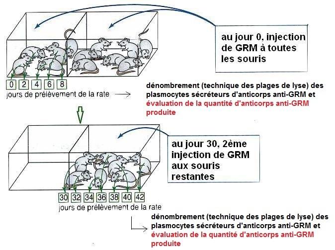 protocole mémoire