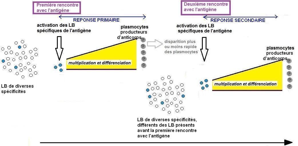 modèle scientifique mémoire hypothèse 0.JPG