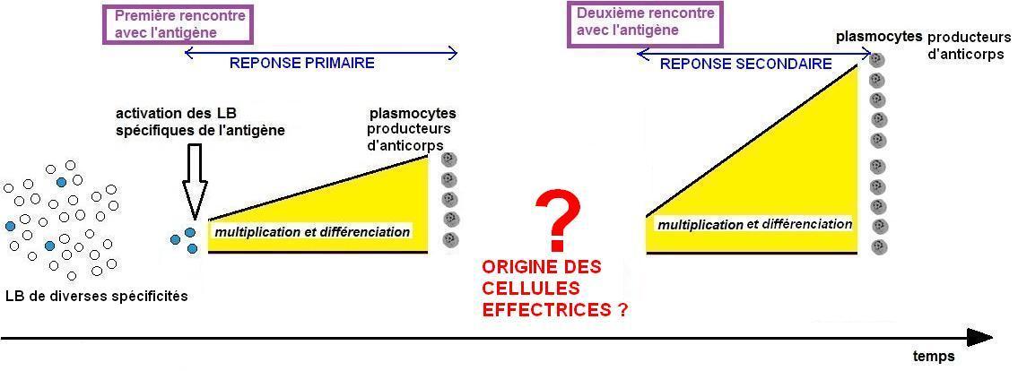 modèle scientifique mémoire initial.JPG
