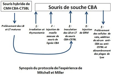 synopsis expérience Mitchell-Miller