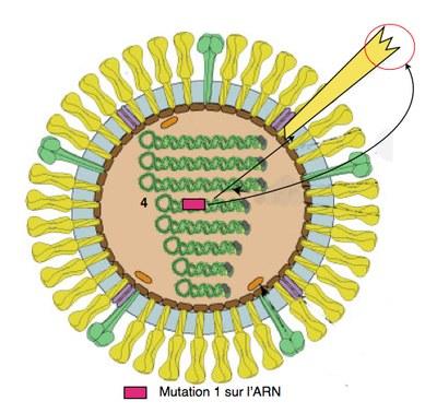 mutation 1 arn4