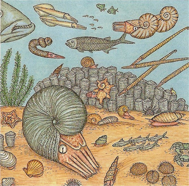 Cretace.jpg