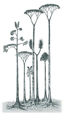 IId lepidodendrondiversite2.jpg