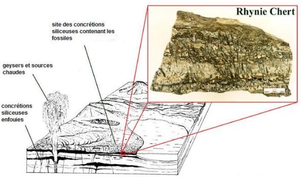 fossilisation Rhynie