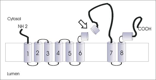 Structure de la PS1